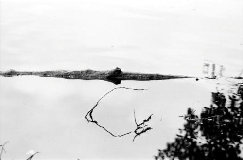 Krokodil im Weiher