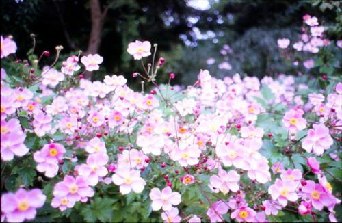 Botanischer Garten in FfM