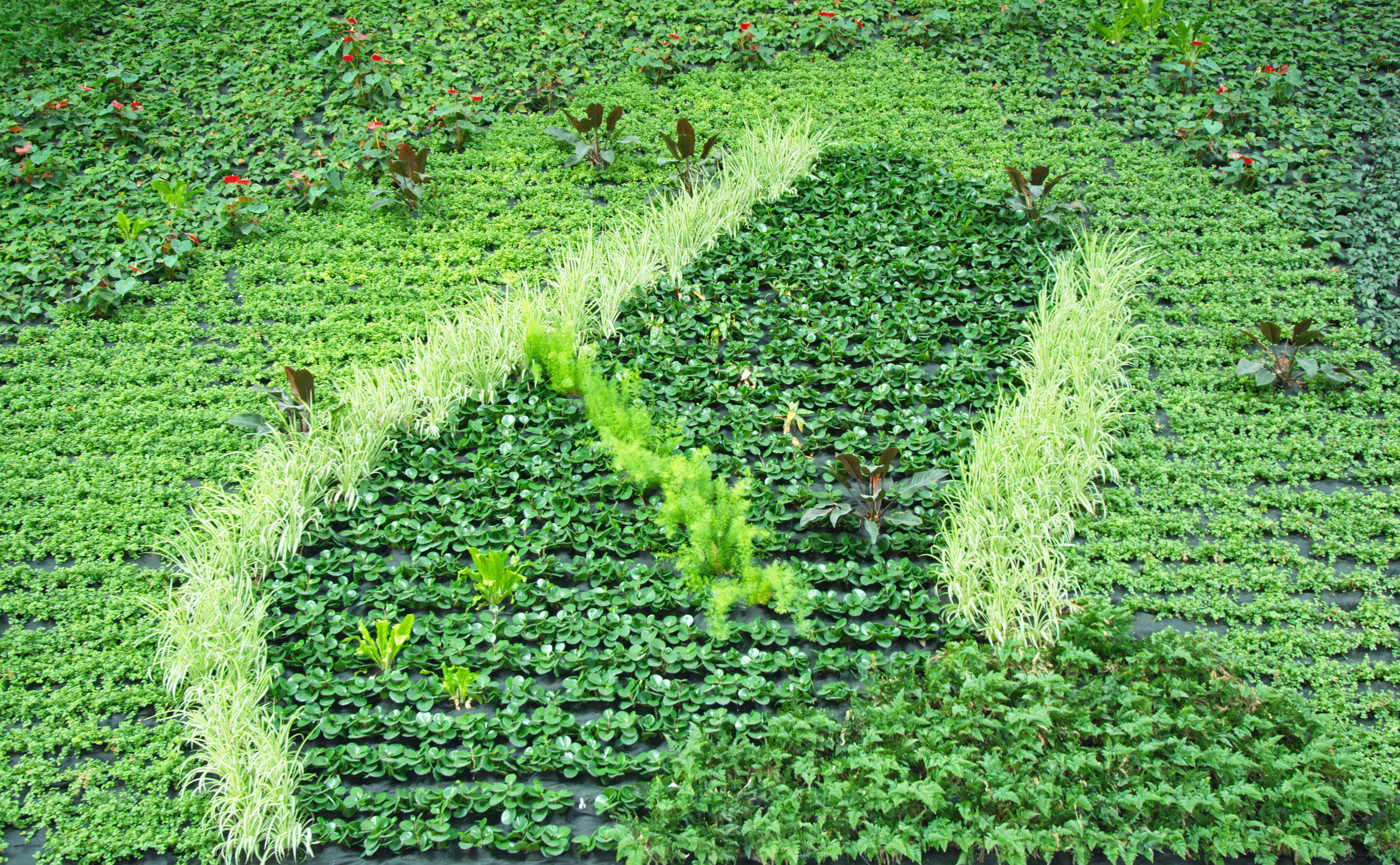 Eine Wand aus Pflanzen